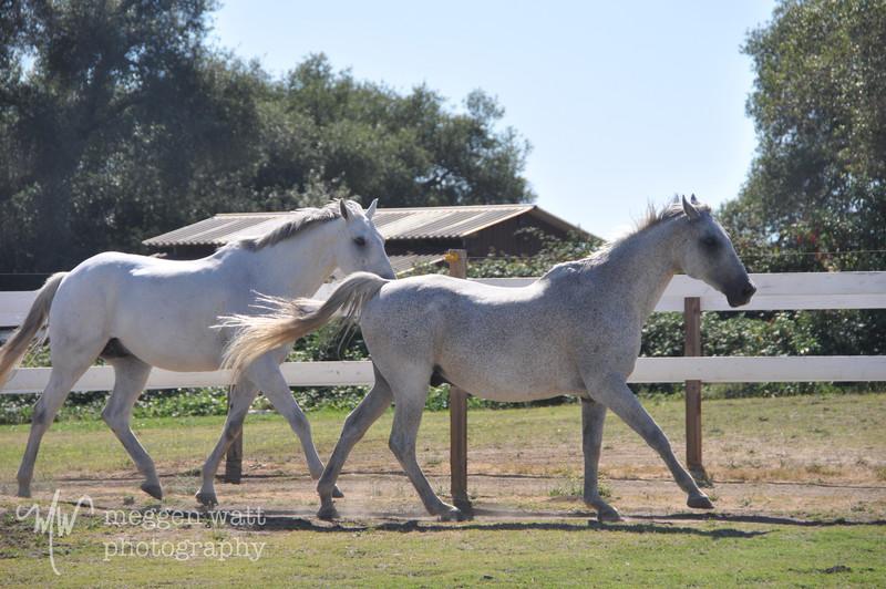EB&Horses-137.jpg