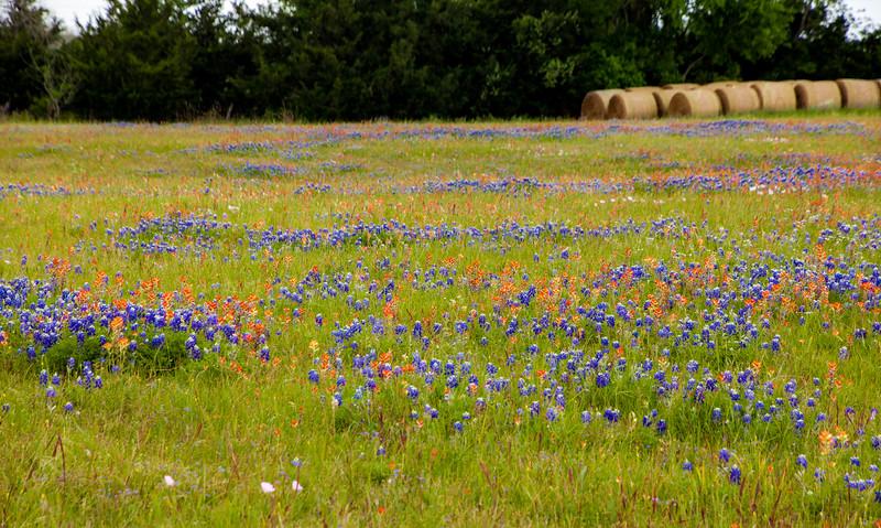 2016_4_9 Texas Wildflower Shoot-8597.jpg
