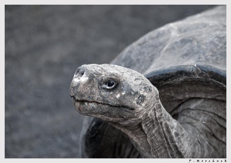 tortoiseonlyspeak48-(9).jpg