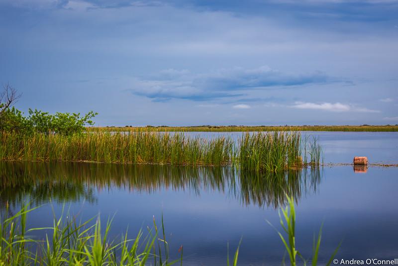 River of Grass2.jpg