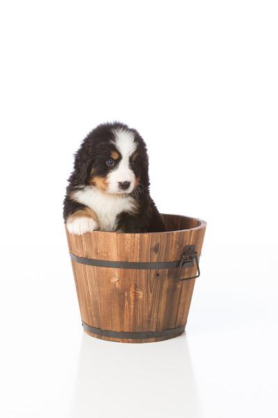 2013-Pearson Pups-Jun02-0462.jpg