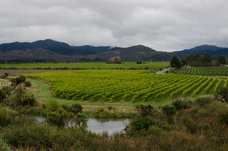 Marlborough Wine Region in Blenheim, New Zealand
