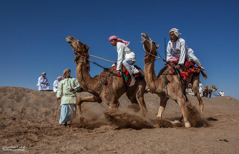 camels (20) copy.jpg