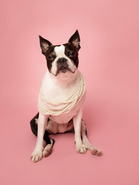 Pets-Simone02.jpg