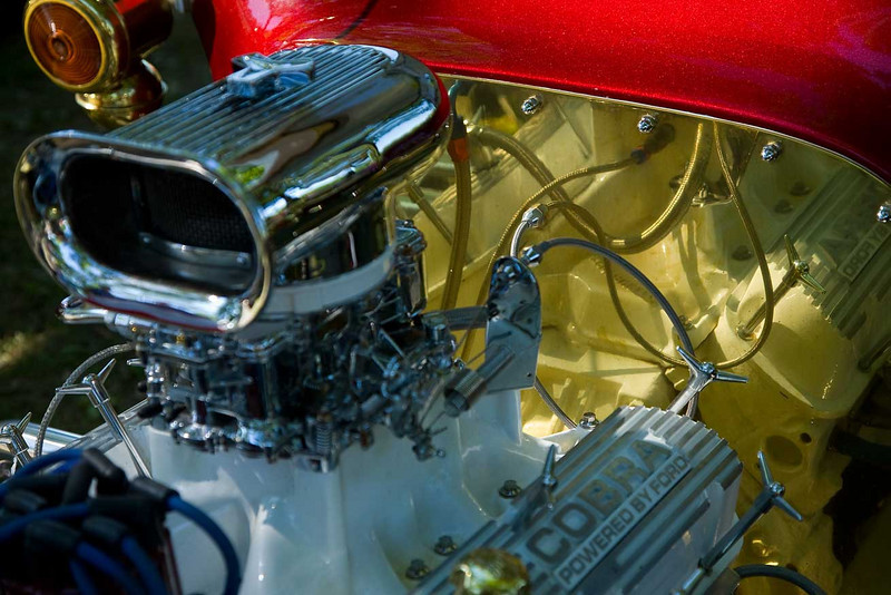 IMG_8039-Cobra-www.jpg