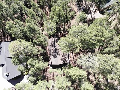 3126 DEEP FOREST