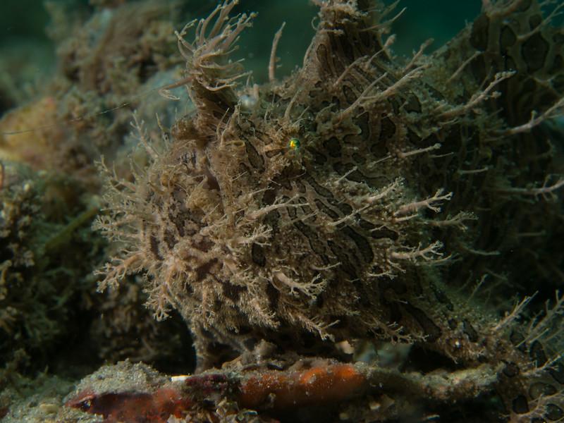Reef BHB 2016-7080109.jpg