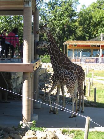 Niabi Zoo - September 2013