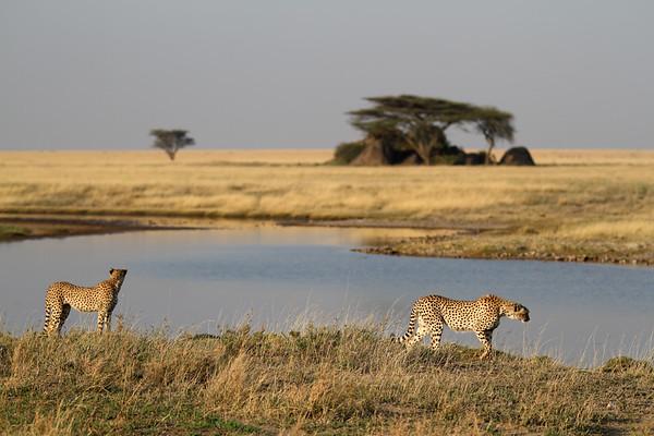 Kenya and Tanzania 2017