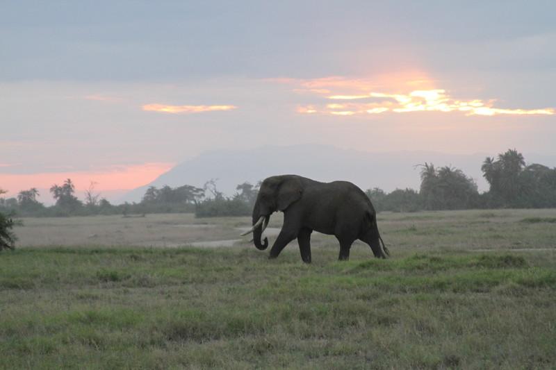 Kenya 2019 #2 1665.JPG