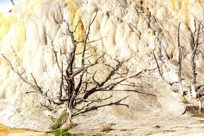 Yellowstone_May_2014_IG3A0381.jpg