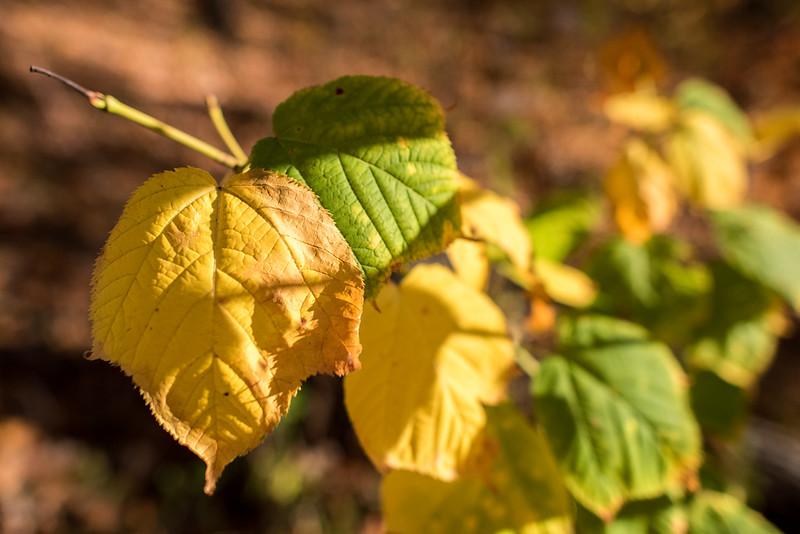 foliage-2014-15.jpg
