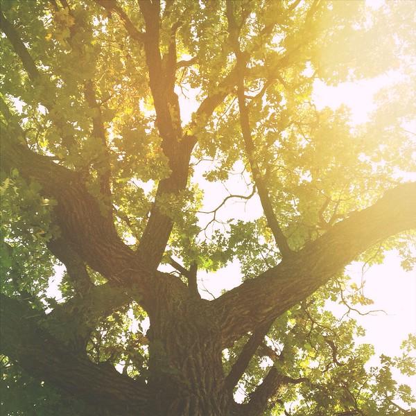 Speak For The Trees
