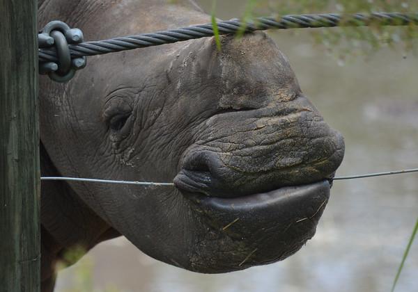 Lowry Park Zoo Animals Africa