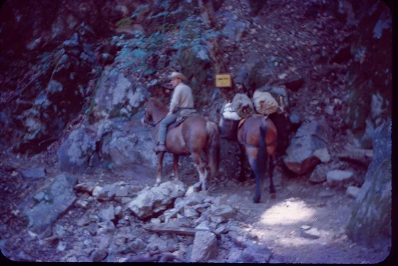 1963 09 Santa Lucia National forest.jpg