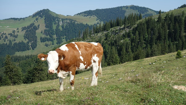 2018.07 Chiemgau Alps