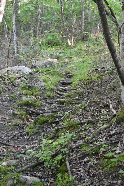 2019_06_26 CS Trail (56).JPG
