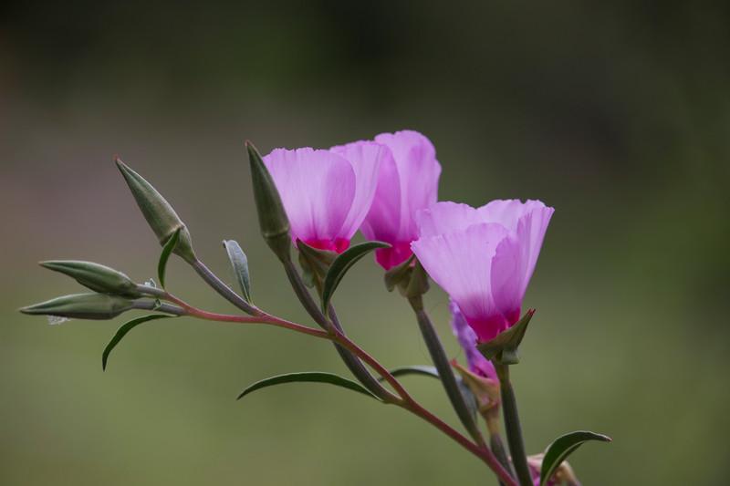 KoRedfield-Floral66.jpg