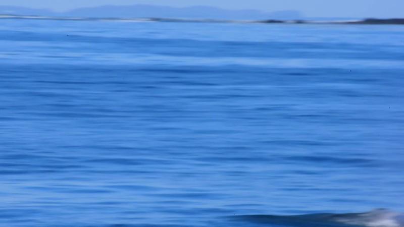 Whale.mp4