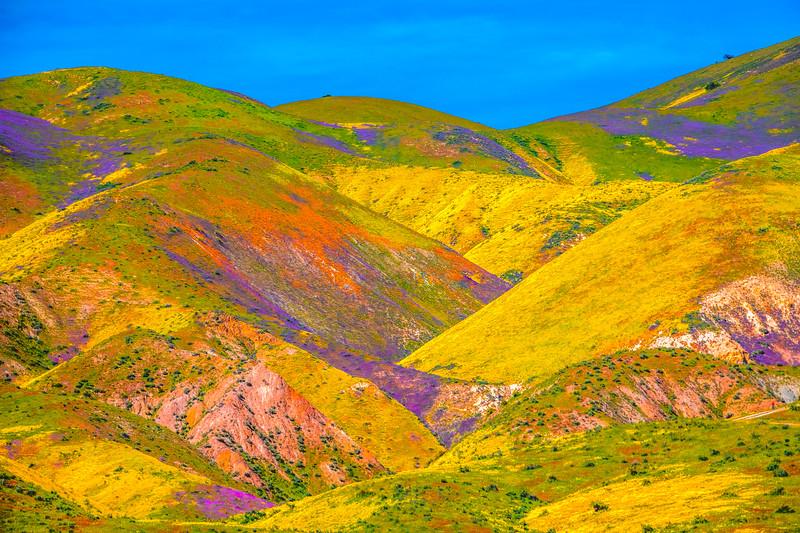 Carrizo Plain National Monument Wildflowers Superbloom Spring Symphony 26!  Elliot McGucken Fine Art Landscape Nature Photography Prints & Luxury Wall Art