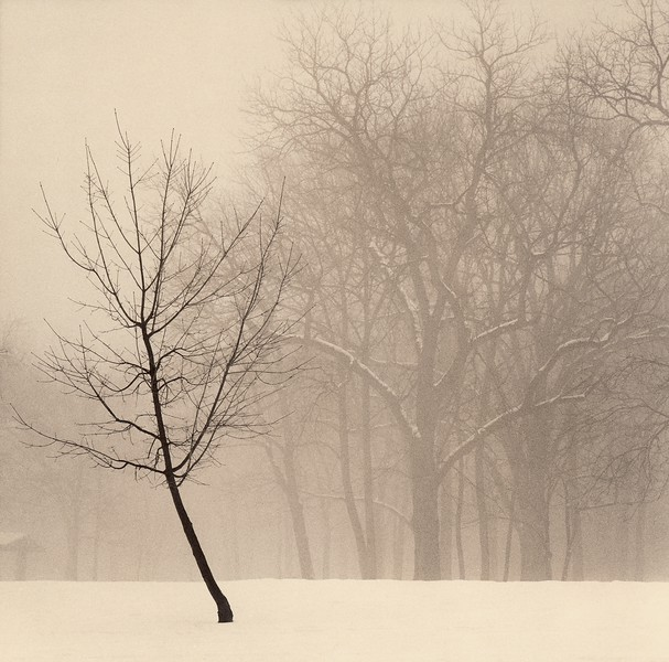 Single Tree, Palos Park, Illinois