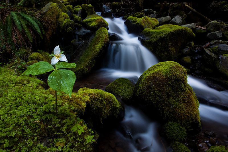 Between a Rock and a Trillium.jpg