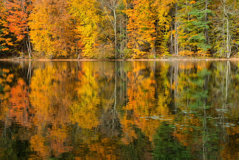 Vermont Fall 2019-14.jpg