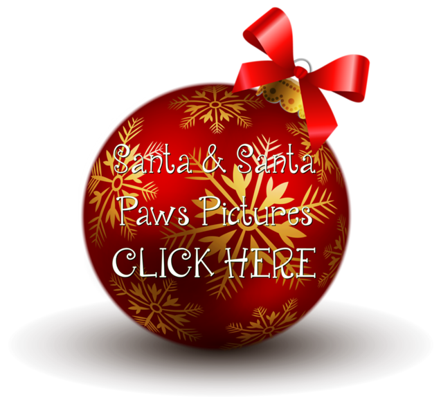 Christmas-Ornament-HD-PNG 2.png