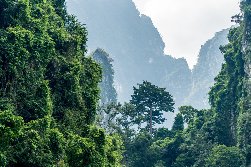 Khao Sok National Park, Thailand. One of the oldest evergreen rainforests in the world.
