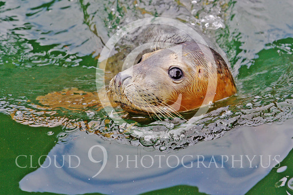 Seal Wildlife Photography