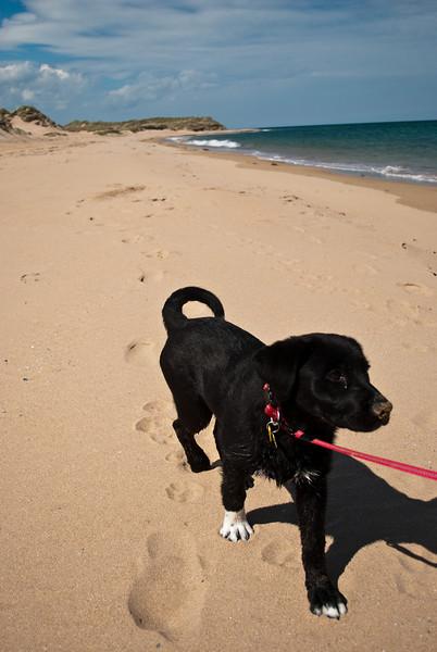 Rattray Head Beach-13