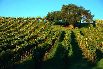 101103 Edna Valley vineyards