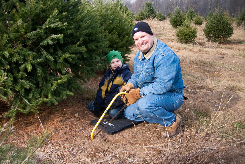 K.C. helps dad cut down the tree.