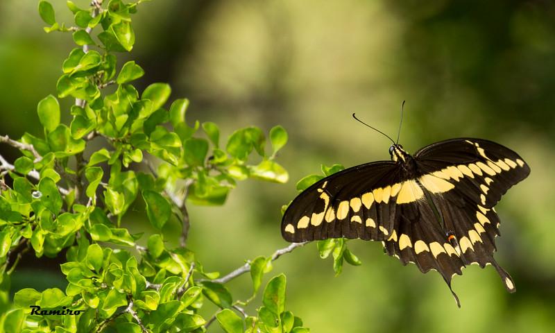Butterfly 7-3-15 305.jpg