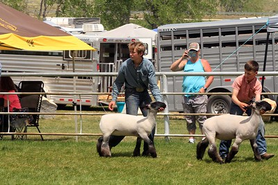 Intermediate Sheep Showmanship Sunday