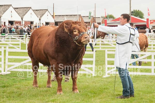 Limousin judging @GYS 2015