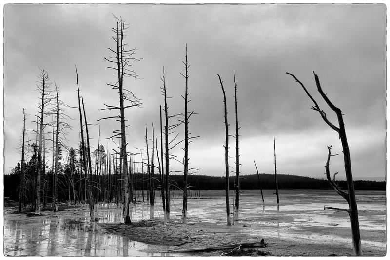 02_Yellowstone National Park_Montana_Wyoming-59.jpg