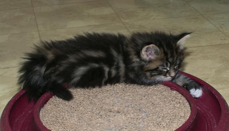 Kittens322.jpg