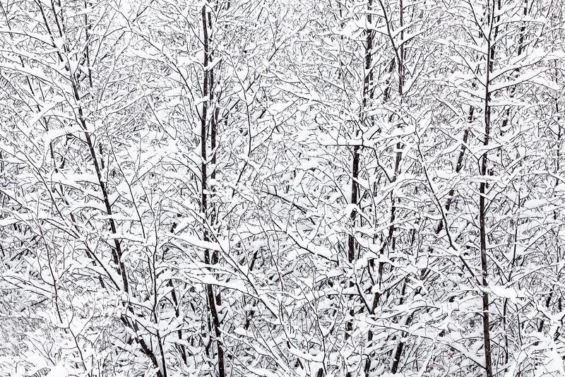 Winter Etchings