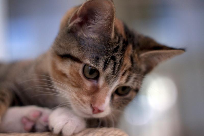 Kittens - Flyza Minelli.jpg