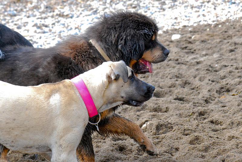 dogs_beach-044.jpg