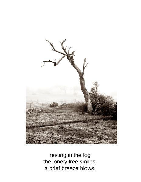 2009-12-13 Lone tree in Fog black and white poem B1046.jpg