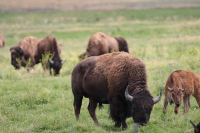 26 14 Bison Farm