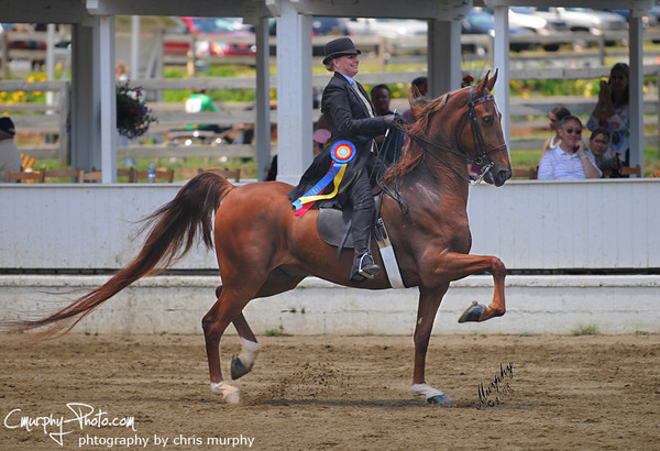 Saddle & Bridle Magazine