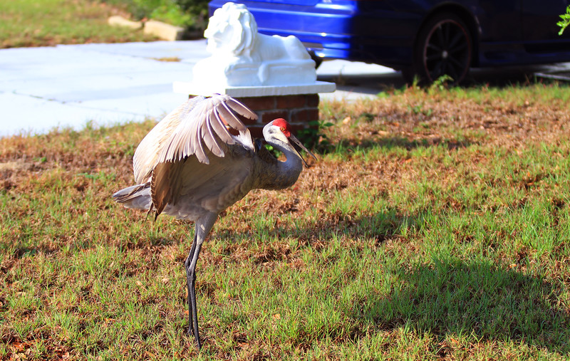 cranes-3-4-19_4816.jpg