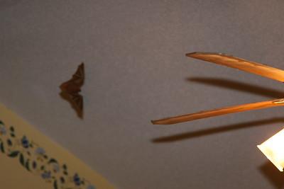 bat in the bedroom 2009