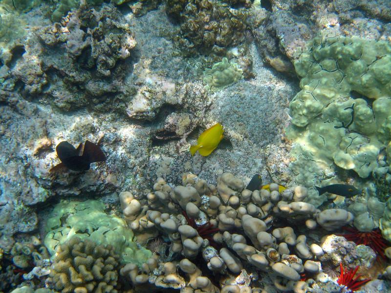 437- 20080416- Hawaii 20-Snorkelling IMG_0607.jpg
