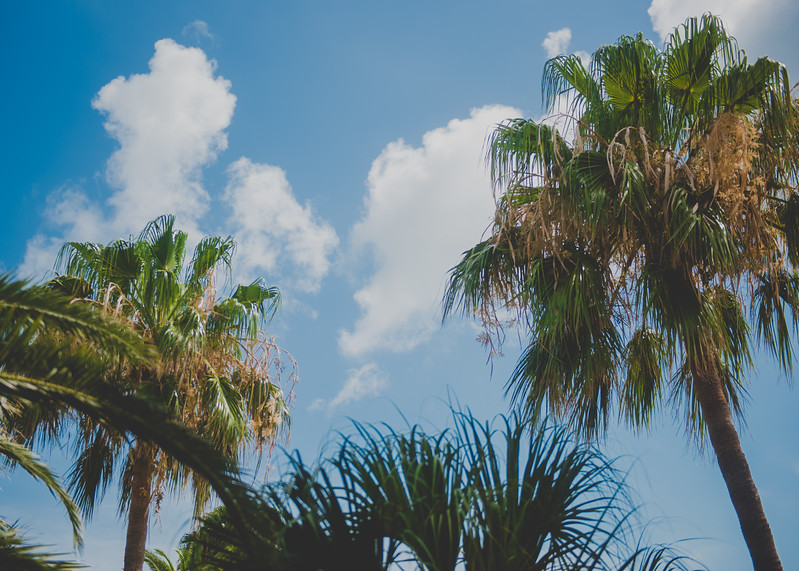 Stay cool under our beautiful palm trees at the Island University.