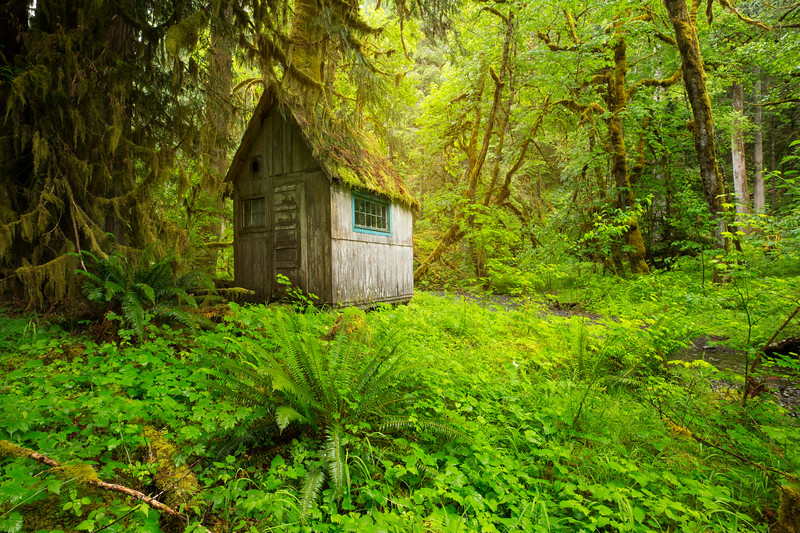 shed in light.jpg