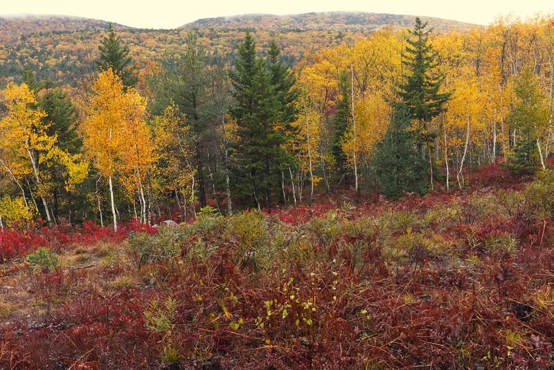 Autumn in Acadia 2018.jpg
